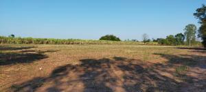 For SaleLandMaha Sarakham : Beautiful land for investment, Kosum Phisai District, Maha Sarakham, near Wangkanai Kosum Sugar Factory