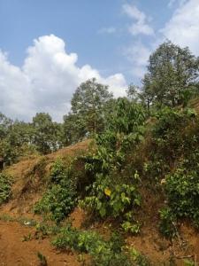 ขายที่ดินจันทบุรี : AE64060 ขายสวนทุเรียน ยกสวนกว่า 2000 ต้น 70 ไร่ พร้อมสระนํ้าใหญ่ 1 บ่อ ติดถนนลาดยาง จันทบุรี