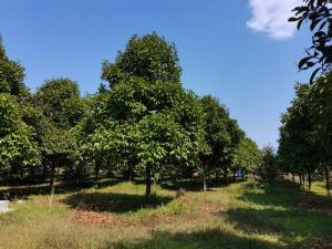ขายที่ดินสมุย สุราษฎร์ธานี : AE64058 ขายสวนทุเรียนกับมังคุด พร้อมโรงเรือน เนื้อที่ 21 ไร่กว่า ใกล้ นํ้าตกกระทิง สุราษฎร์ธานี