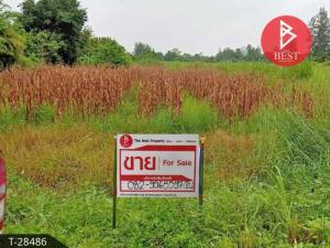 For SaleLandRatchaburi : Beautiful land area of 4 rai 1 ngan 29.1 square meters, Suan Phueng, Ratchaburi.