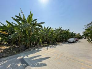 For SaleLandOnnut, Udomsuk : Land for sale, beautiful plot, On Nut 53, land size 352 sq.wa