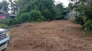 ขายที่ดินกระบี่ : ขาย!!!ที่ดินเปล่า ติดถนน ใกล้แหล่งชุมชน