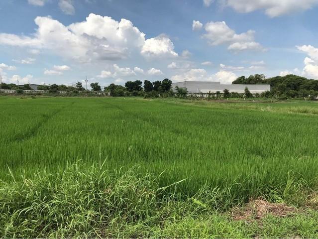 ขายที่ดินอยุธยา สุพรรณบุรี : ขายที่ดินพื้นที่สีม่วง อ.อุทัย จ.อยุธยา  เนื้อที่ 13-2-80 ไร่ ใกล้นิคมโรจนะ1