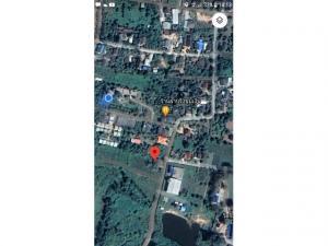 ขายที่ดินเชียงใหม่-เชียงราย : ที่ดินแม่แฝก เชียงใหม่ สัมผัสหมอก ธรรมชาติ วิวภูเขา แหล่งชุมชนอบอุ่น น้ำไฟ ถนนลาดยางห่างถนน1001ที่กำลังขยายเป็นสี่เลนส์ 125/300 ตรว.