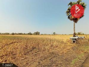 For SaleLandNakhon Sawan : Land for sale 31 rai 1 ngan 69.0 square meters Phayuha Khiri Nakhon Sawan