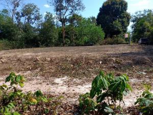 ขายที่ดินอุบลราชธานี : ขายที่ดินเปล่า บ้านหนองหว้า (ถมแล้วเรียบร้อยเหมาะกับการสร้างบ้าน)