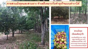For SaleLandNakhon Si Thammarat : Selling mangosteen and rubber plantations Good location, suitable for doing different types of businesses. Nakhon Si Thammarat Province