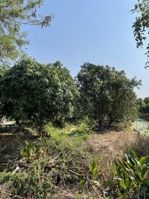 For RentLandRamkhamhaeng,Min Buri, Romklao : For rent land size 2 rai with mango orchard.