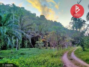 For SaleLandChumphon : Land for sale, 2 rai 2 ngan 79.3 square meters