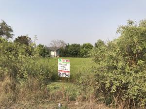 For SaleLandBangbuathong, Sainoi : Land for sale 398 square wah Sai Noi, Nonthaburi.