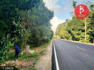 For SaleLandChumphon : Land for sale in durian plantation area 2 rai 3 ngan 14.9 square wah, Lang Suan, Chumphon.