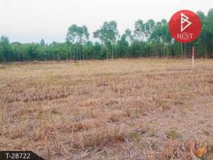 ขายที่ดินปราจีนบุรี : ขายที่ดินเปล่า ใกล้นิคมอุตสาหกรรมบ่อทอง กบินทร์บุรี ปราจีนบุรี