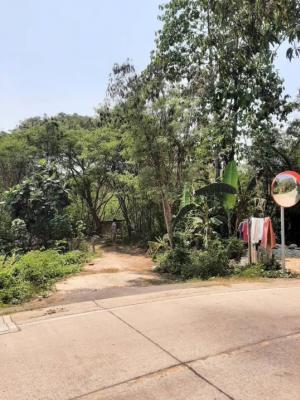 ขายที่ดินบางใหญ่ บางบัวทอง ไทรน้อย : 🛣ขายที่ดินแปลงใหญ่ ทำเลดีมากเหมาะสำหรับสร้างหมู่บ้าน🏠📍ซอยไทรม้า20 เมืองนนทบุรี