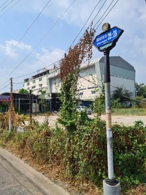 For RentLandChengwatana, Muangthong : Land for rent 250 square wa. Soi Ngamwongwan 25 before entering the house. Plus City Park And Setthasiri Prachachuen