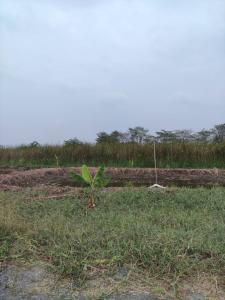 For SaleLandNakhon Pathom, Phutthamonthon, Salaya : Land for sale, Phutthamonthon Sai 4, Saw Krathumlom 32, cheap, suitable for agriculture, has wells ready.