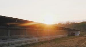 ขายที่ดินจันทบุรี : ฟาร์มหมูระบบปิดขนาดใหญ่ + สวนยางพึ่งเปิดหน้า 60 ไร่ (ต่อรองได้)
