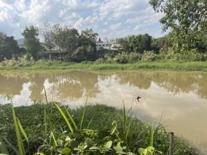 ขายที่ดินเชียงใหม่-เชียงราย : ขายที่ดินแปลงสวยมาก หลังติดแม่น้ำปิง อ.เมือง จ.เชียงใหม่ อยู่ในแหล่งความเจริญ ที่ยังสัมผัสธรรมชาติ เหมาะทำที่พักอาศัยยามเกษียณจากการทำงานนะคะ ใกล้แหล่งความเจริญแต่ยังอยู่กับธรรมชาติสวยๆค่ะ