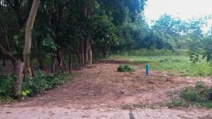For SaleLandUbon Ratchathani : Land for sale in Det Udom, Ubon Ratchathani, almost 12 rai of title deed is a rubber plantation on a concrete road near the main road.