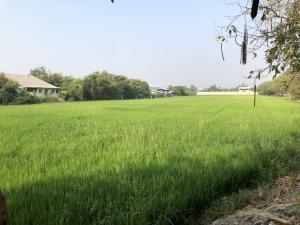 For SaleLandSuphan Buri : 7 rai of land in U Thong city, next to the road