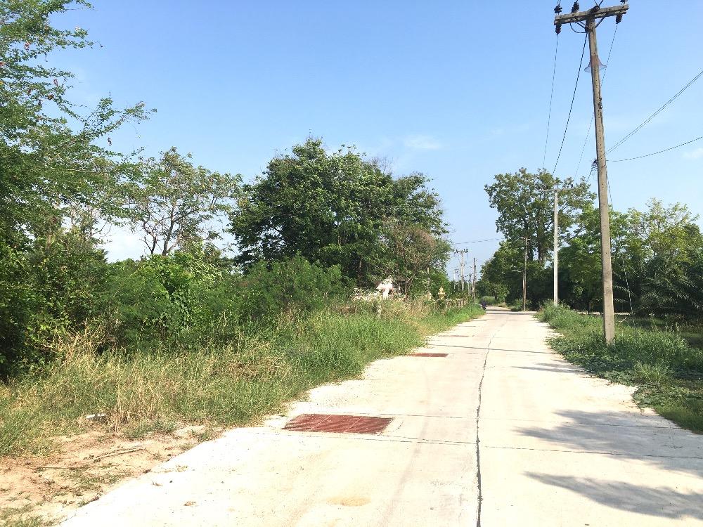 For SaleLandPattaya, Bangsaen, Chonburi : Land for sale in Map Pong, Phan Thong, Chonburi, area of 10 rai, 2.1 million each.