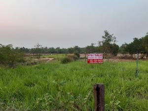 ขายที่ดินอุบลราชธานี : ขายถูกที่ดินเปล่า ติด อบต.ไร่น้อย ใกล้ถนนอุบล-ตระการ ฝั่งขาเข้าเมือง