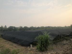 For SaleLandNakhon Pathom, Phutthamonthon, Salaya : Land for sale now! 1 rai near Sanam Luang Song