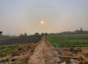 For SaleLandPhichit : Beautiful land, very cheap, 16 rai, only 2.5 million ready crops.