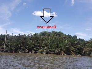 For SaleLandRathburana, Suksawat : ขายที่ดิน ติดแม่น้ำเจ้าพระยา บางกระเจ้า-บางกอบัว 375 ตารางวา Ref. A01201101