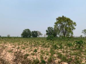 ขายที่ดินขอนแก่น : ขายที่ดินเปล่า บ้านโนนรัง จังหวัดขอนแก่น เนื้อที่ 29 ไร่ 3 งาน 30 ตารางวา