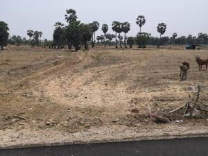 For SaleLandCha-am Phetchaburi : Beautiful land in front of the black road, cut the road line 5020, selling price 1,200,000 baht.