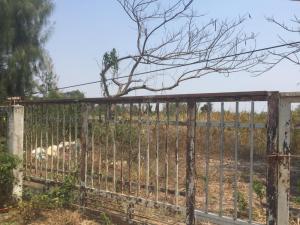For SaleLandSamrong, Samut Prakan : Land for sale in yellow plan, below market price 40,000,000 baht, next to 4 lanes road.