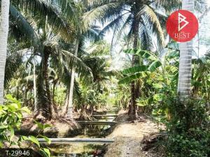 For SaleLandSamut Songkhram : Land for sale with a garden area of 1 rai 1 ngan 77 square wa, Amphawa, Samut Songkhram.