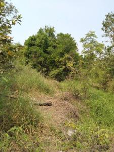 For SaleLandNakhon Pathom, Phutthamonthon, Salaya : Land for sale next to the Tha Chin River. Long on a public road, rare plots, Bang Len District, Nakhon Pathom Province