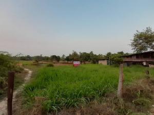 For SaleLandUbon Ratchathani : >> Selling a beautiful plot of land 8 rai 1 ngan (Ban Yang Thoeng Temple, Ubon Ratchathani)