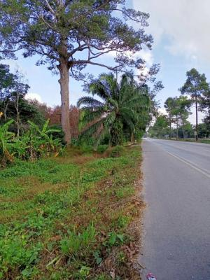 For SaleLandSamui, Surat Thani : Land on the Asian road, suitable for pumping