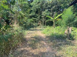 For SaleLandRatchaburi : Land for sale in Ratchaburi, Photharam, near Bang Phae intersection.