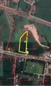 For SaleLandTrang : Land for sale, rubber plantation 5-0-1.7 rai (2 plots next to)