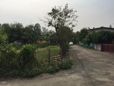 For SaleLandChiang Mai, Chiang Rai : Land for sale in Chiang Mai, 839 sq.w., Nong Hoi Market, Thom 33000 baht / sq.wah
