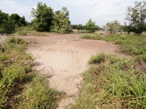 ขายที่ดินอยุธยา สุพรรณบุรี : ขายที่ดิน  65-2-55 ไร่ อยุธยา บางปะอิน  ติดถนนนตลาดเกรียบ-วัดยม