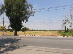 ขายที่ดินมีนบุรี-ร่มเกล้า : ขายที่สวยหนองจอก 50 ไร่ ติดถนนใหญ่  ใกล้ตลาดสดคลองสิบสองลำไทร