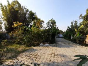 ขายที่ดินเชียงใหม่ : ขายที่ดินสวยพร้อมบ้านสวน ใกล้ถนนต้นยาง ต้นไม้ร่มรื่น ธรรมชาติดีมาก เหมาะสำหรับเป็นที่พักใจอย่างยิ่ง
