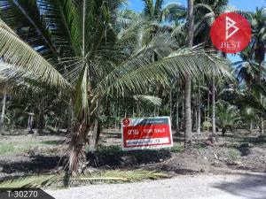 For SaleLandRatchaburi : Land for sale in coconut plantation 7 rai, Wat Plong, Ratchaburi.
