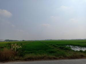 For SaleLandRangsit, Patumtani : !!! Urgent sale, beautiful land, Lamlookka Klong 9, good location, area of 121 rai