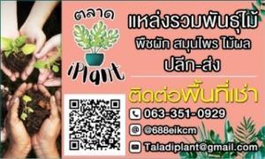 เช่าพื้นที่ขายของ ร้านต่างๆบางนา แบริ่ง : พื้นที่เช่าตลาดต้นไม้ iPlant
