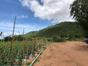 For SaleLandKanchanaburi : Land for sale 7 rai 2 ngan 57 square meters Phanom Thuan Kanchanaburi.