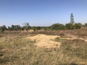 For SaleLandKhon Kaen : Land for agriculture for sale of 9 rai, Ban Haet District, Khon Kaen