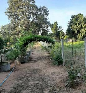 For SaleLandKhon Kaen : The owner sells himself at the garden, good location with big trees and natural atmosphere house. Nong Song Hong District, Khon Kaen Province