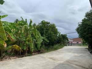 ขายบ้านนครปฐม พุทธมณฑล ศาลายา : ขายบ้านพร้อมที่ดินทั้งหมด 6 ไร่ 12 ตรว. ในซอยวัดเทียนดัด จ.นครปฐม