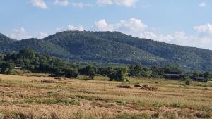 ขายที่ดินลำพูน : ขายที่ดิน ที่สวนลำไยและผลไม้อื่นๆ จังหวัดลำพูน 55ไร่ 20ล้าน