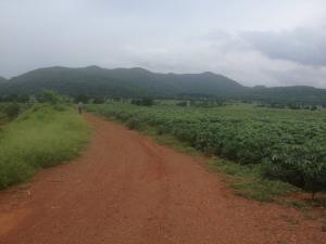 For SaleLandLop Buri : Land for sale in Lopburi Province, land area 932 rai